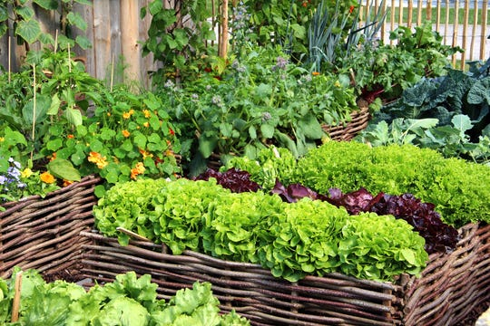 Want to start an herb garden? You can learn more by visiting a nursery or taking an upcoming workshop. Interest in all types of gardening peaks after the Philadelphia Flower Show.
