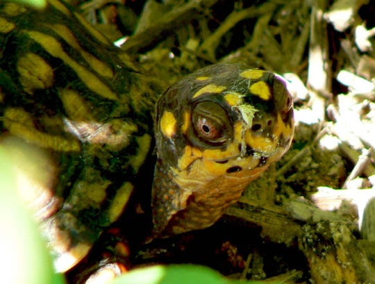 An undercover agent in South Jersey infiltrated a ring that smuggled box turtles from the United States to Hong Kong, authorities say.
