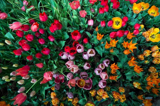 Up close with a bed of flowers inside the Philadelphia Flower Show Thursday, March 16, 2017 at the Convention Center in Philadelphia.