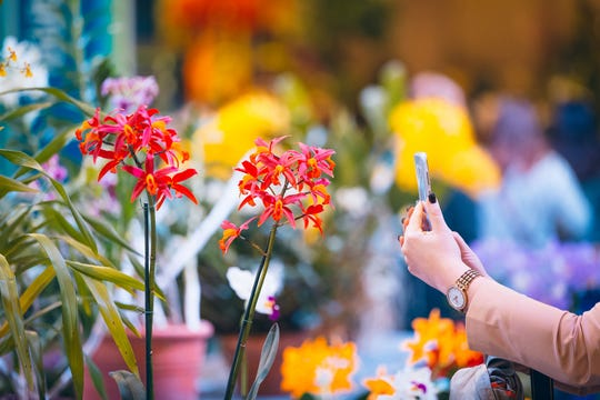 Make sure you come with your phone fully charged and perhaps a backup battery to get the best shots at the Philadelphia Flower Show.