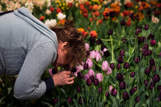 A woman leans in for a sniff inside the Philadelphia Flower Show Thursday, March 16, 2017 at the Convention Center in Philadelphia.