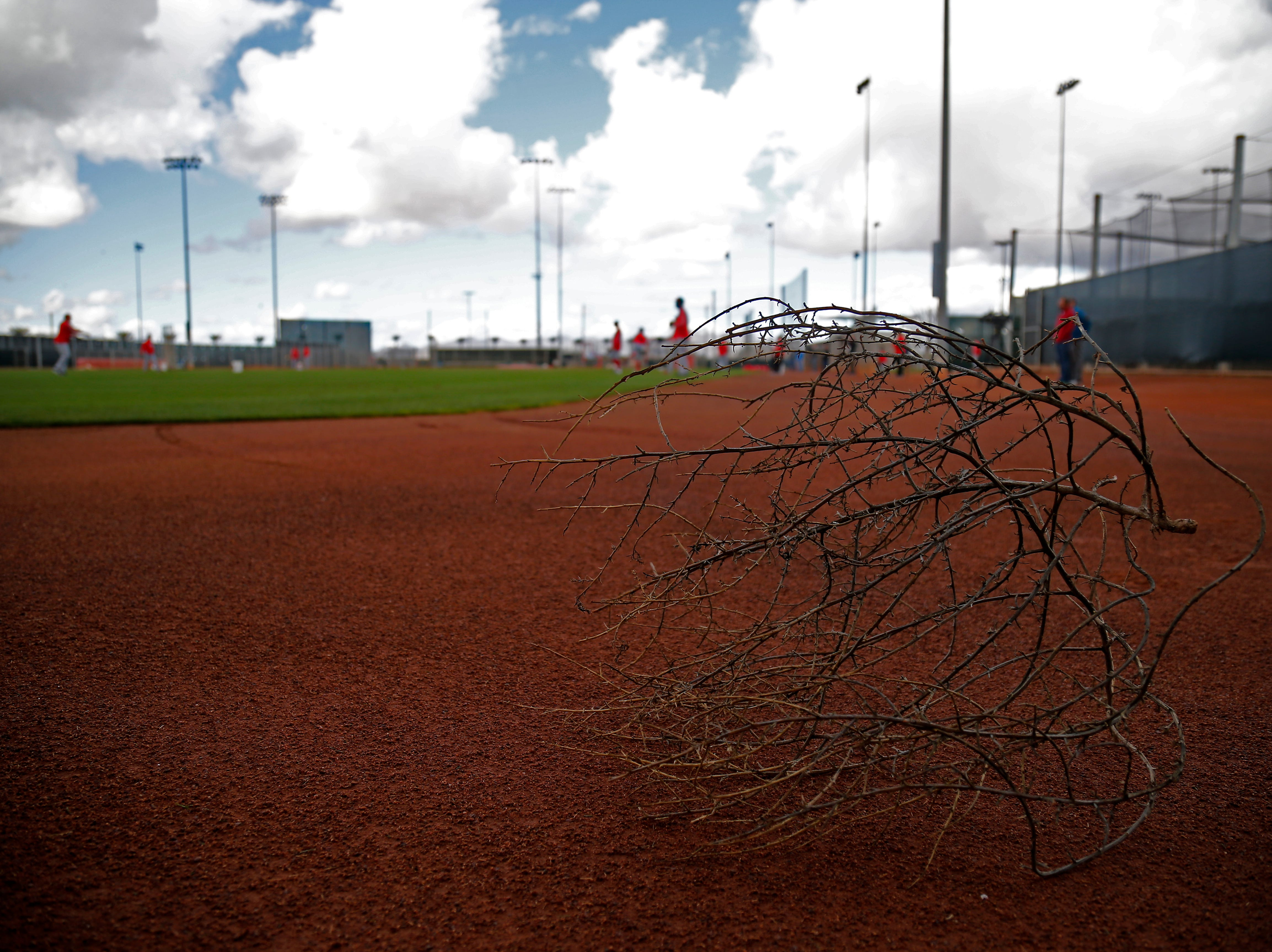 A large tumbleweed comes to a rest in the outfield of a practice field at the Cincinnati Reds spring training facility in Goodyear, Ariz., on Monday, Feb. 18, 2019.