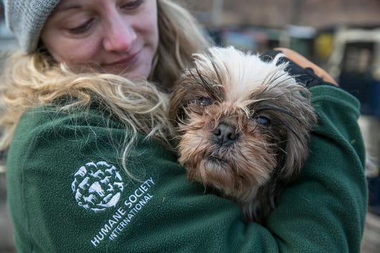 Kelly Donithan, of Humane Society International, rescues at a dog from a farm in Hongseong-gun, South Korea, on Feb. 13, 2019.