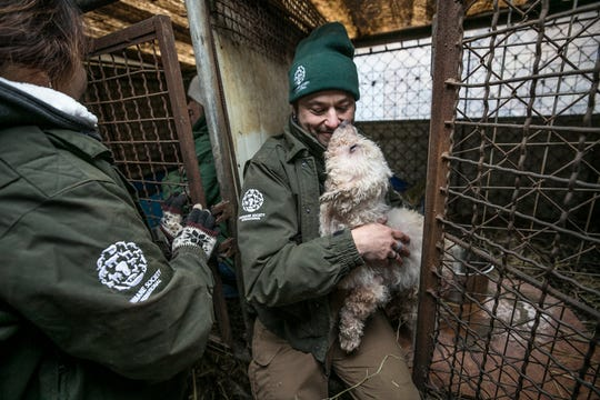 Adam Parascandola, of HSI, cuddles a dog at a meat farm in Hongseong-gun, South Korea, on Thursday, January 10, 2019.