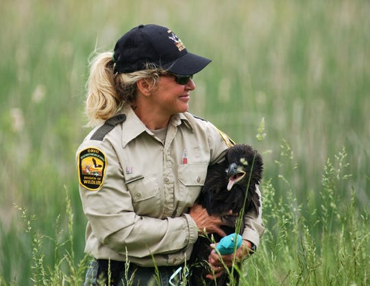 Andrea Tibbles makes her way back from an eagles nest with a young eaglet which was banded at the Navarre Marsh on the grounds of the Davis-Besse Nuclear Power Plant in this file photo. The U.S. Fish and Wildlife Service renewed a lease in December for FirstEnergy Solutions to provide wildlife and water management services in the marsh, which covers more than 700 acres.
