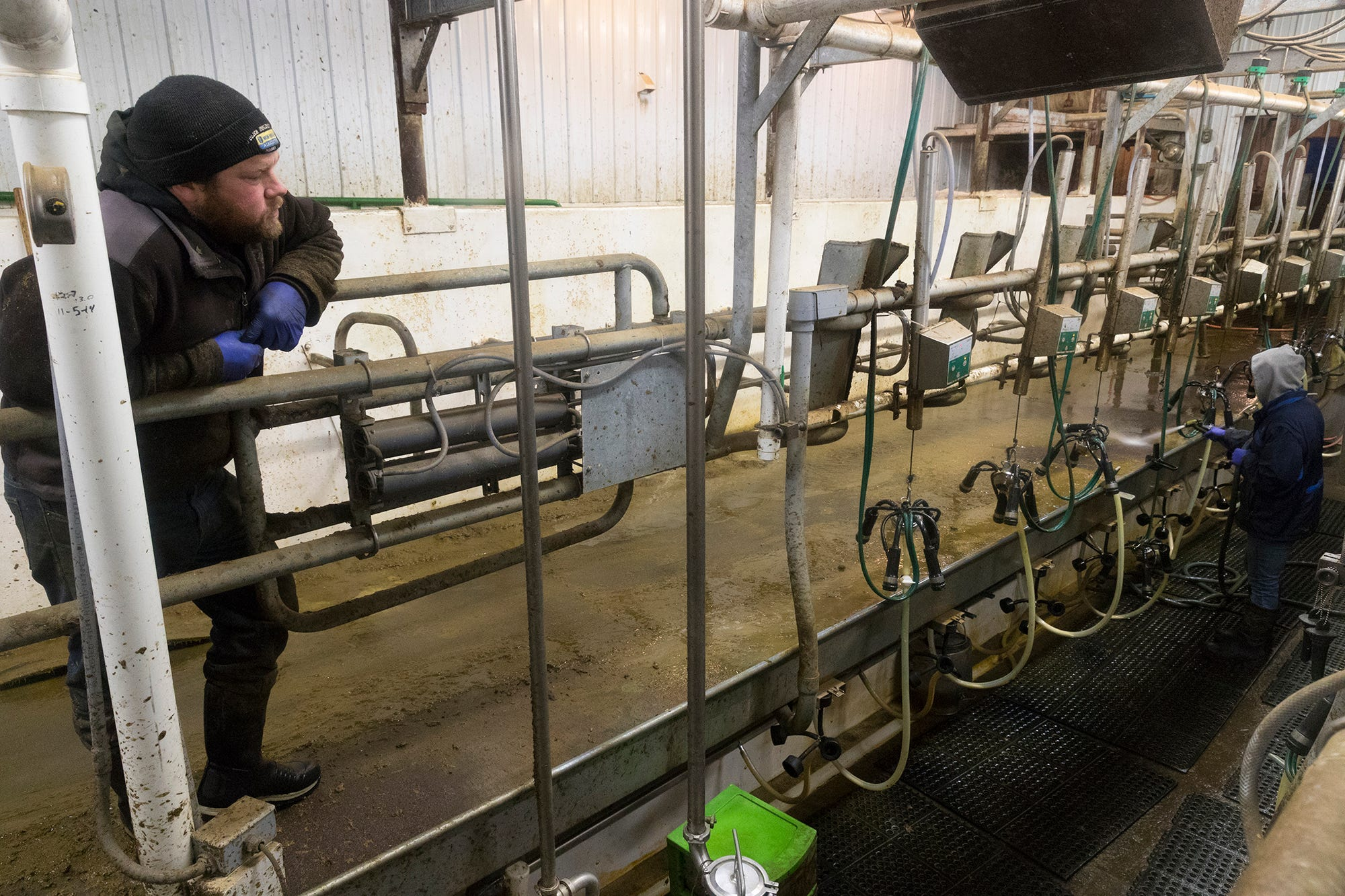 Peter Thewis (left) talks with his wife, Kendra, while doing morning chores in the milking parlor.