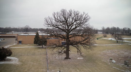 Eastwood Middle School is considering removing 200+ year old Bur Oak tree to be replaced by a parking lot.