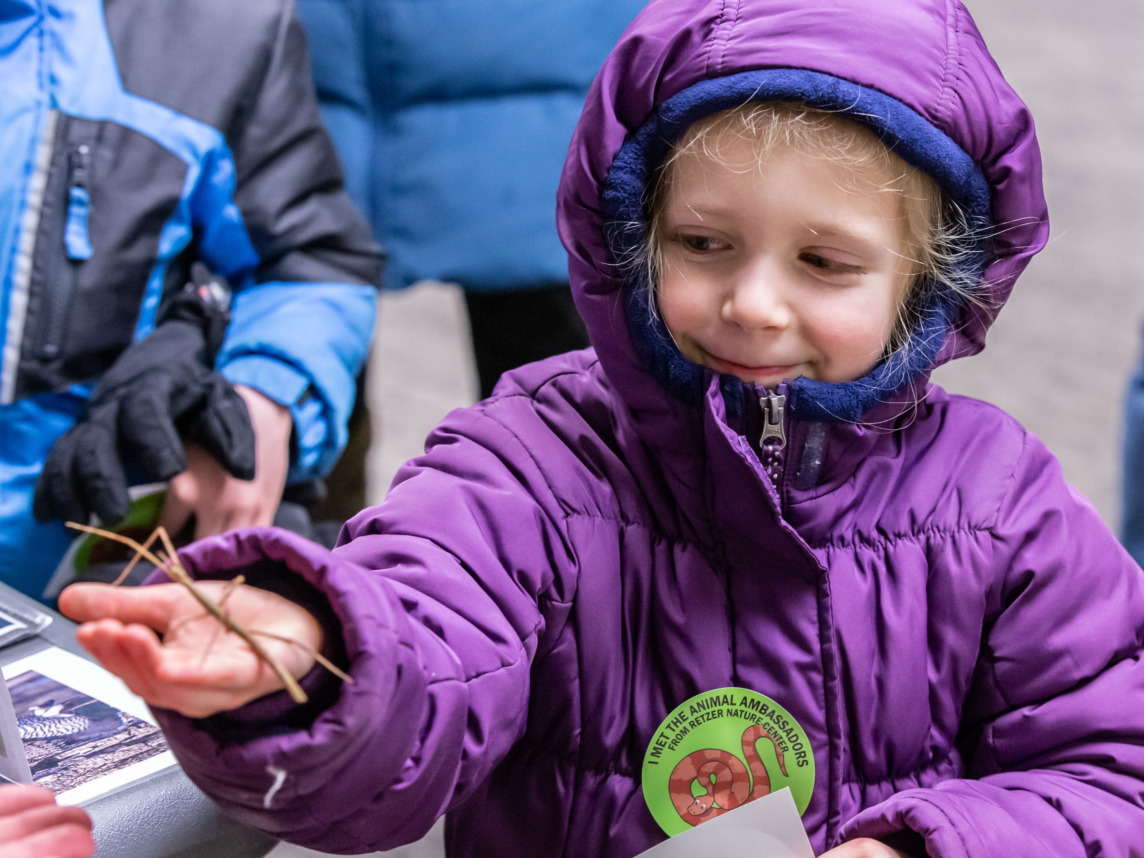 Five-year-old Ellie Fenelon of Brookfield holds a live walking stick during Retzer Nature Center's Wild Winter Night on Saturday, Feb. 16, 2019. The event featured candlelit hikes, snowshoeing, a campfire, educational programs and more.