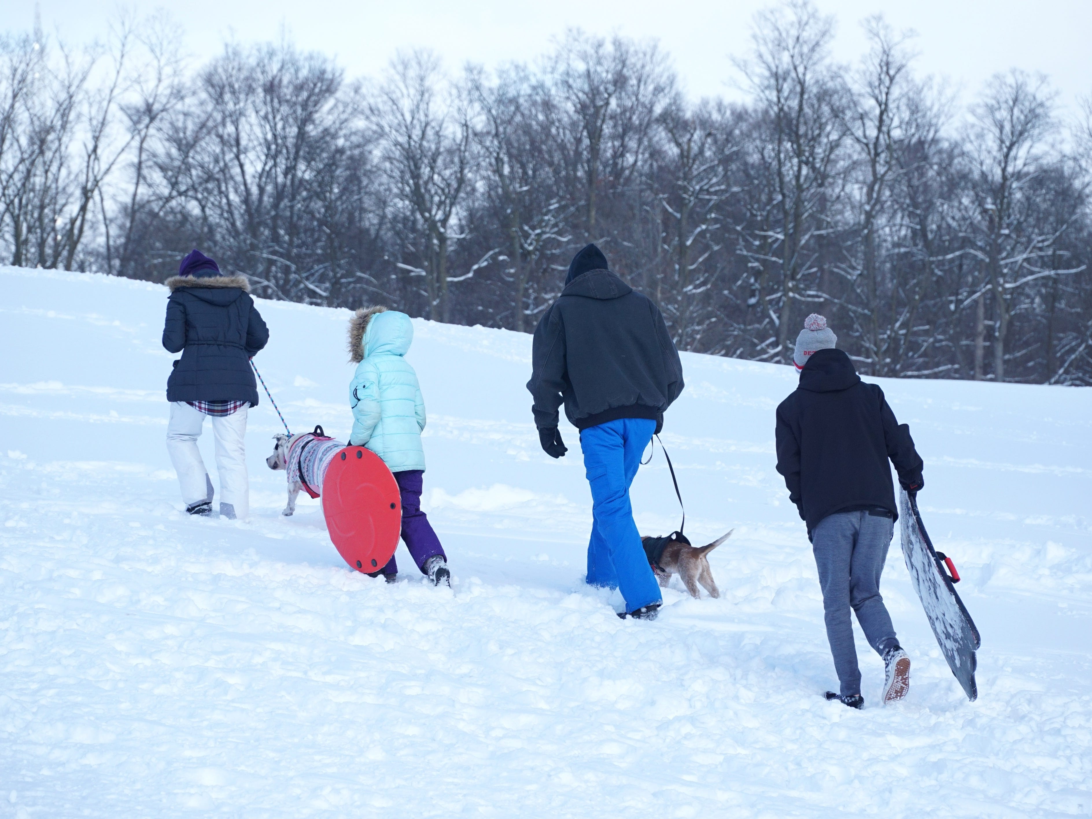 Four humans, two dogs and two sleds make their way up the hill at Cass Benton Park on Feb. 18.