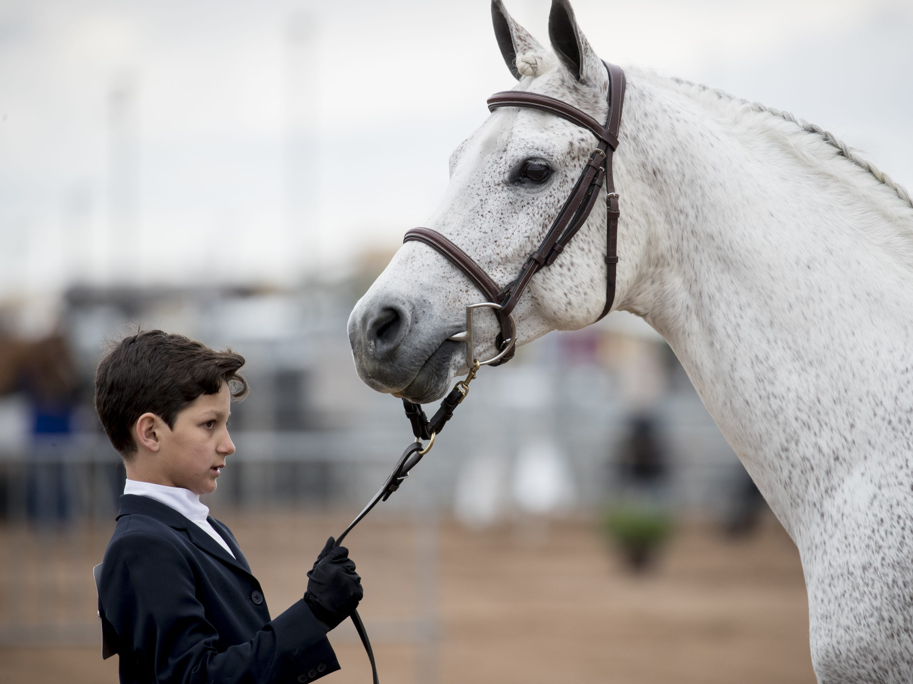 Madison Levernce shows Fohcus in the Arabian Sport Horse In-hand Hunter Type Stallons category on Feb. 18, 2019, during the 64th Annual Scottsdale Arabian Horse Show at West World.