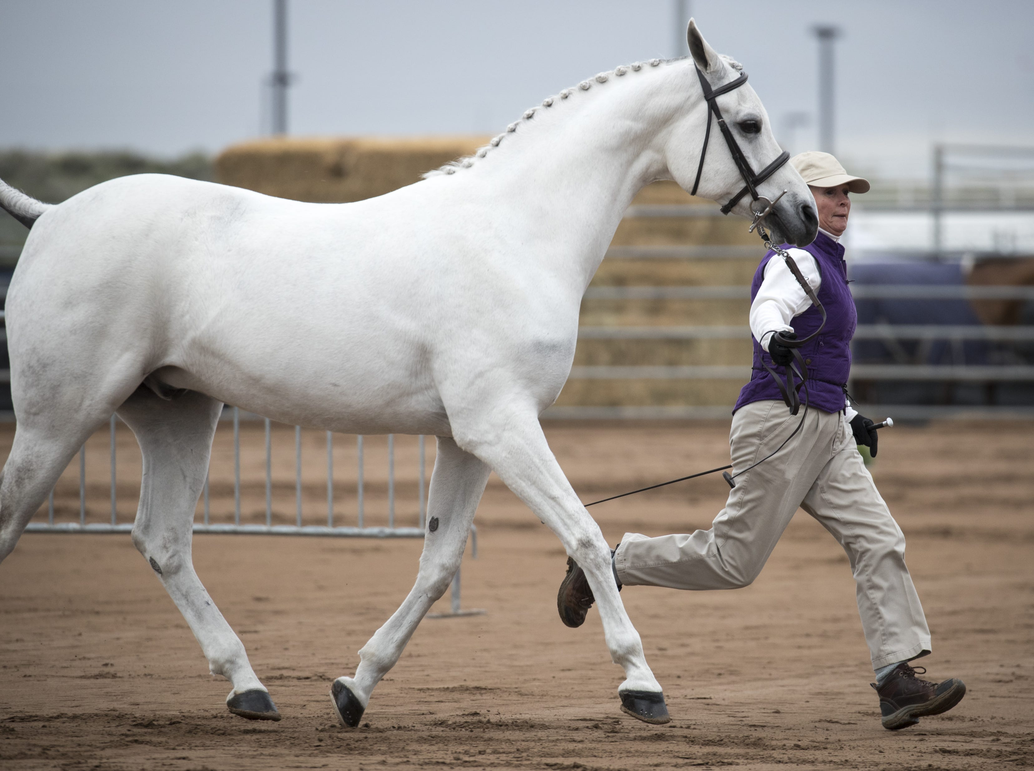 A participant runs her horse in the Arabian Sport Horse In-hand Hunter Type Gelding category on Feb. 18, 2019, during the 64th Annual Scottsdale Arabian Horse Show at West World.