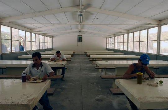 Reos de las Islas Marías consumen alimentos.