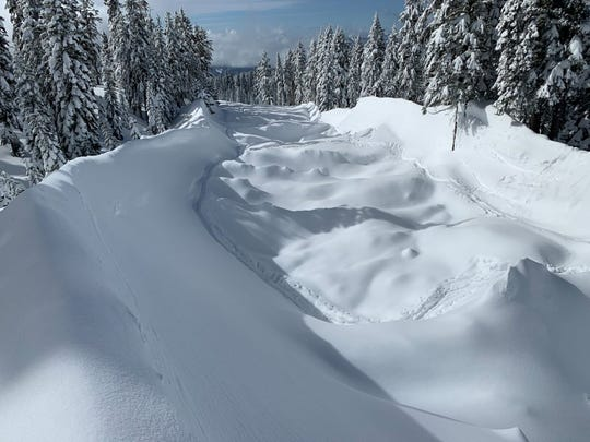 This is a picture of the avalanche's path at about the 7,300-foot level on Mt. Shasta.