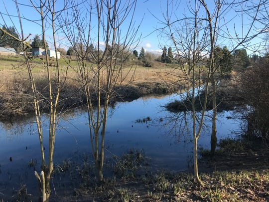 A blockage in a Hayesville sewer main resulted in some 3,000 gallons of untreated sewage going into Claggett Creek, a tributary of the Willamette River on Saturday, Feb. 16, 2019.