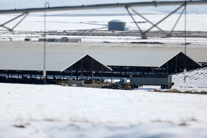 The Lost Valley Farms dairy herd of about 8,000 will be auctioned off on Tuesday, Feb. 19. Photographed near Boardman on Monday, Feb. 18, 2019.
