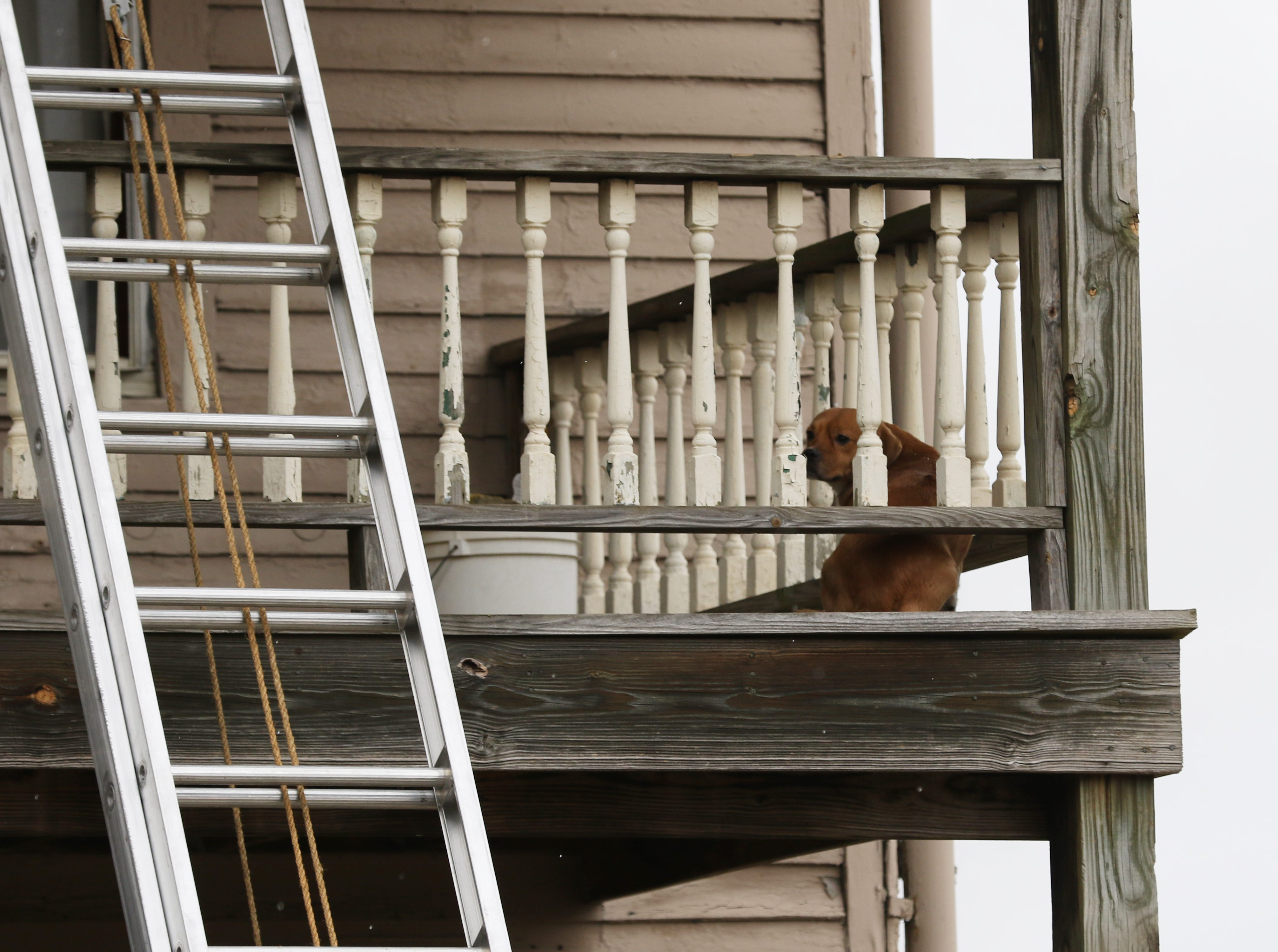The Zanesville Fire Department fought a fire at 924 Maple Avenue in Zanesville Monday afternoon. Two people were taken to the hospital because of the blaze. A dog sits on a second story porch after the fire was contained.