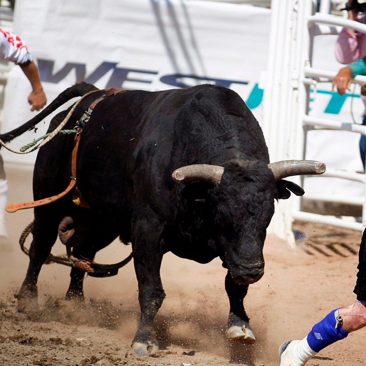 'Cowboy Pinball' in Kentucky gets dangerous as bull flips participants