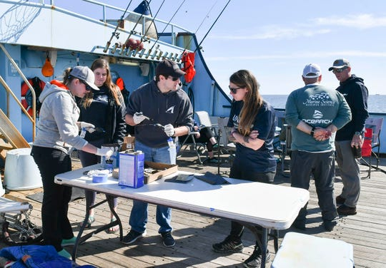 Scientists  and students work aboard the M/V Ocearch anchored off Fernandina Beach