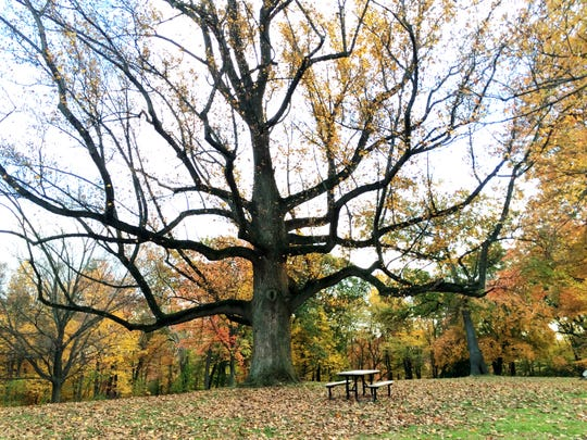 The Union County Board of Chosen Freeholders is partnering with the Shade Tree Advisory Board to sponsor the 2019 Union County Arbor Day Poetry Contest for Union County students. Pictured is an Echo Lake fall tree.