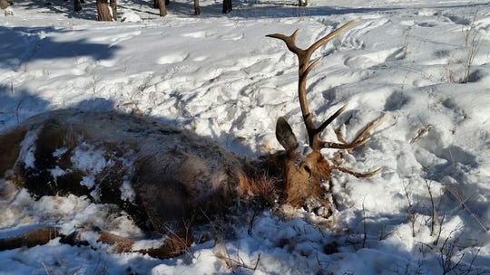 A second bull elk was found near the first one, located north of Cow Creek Reservoir.