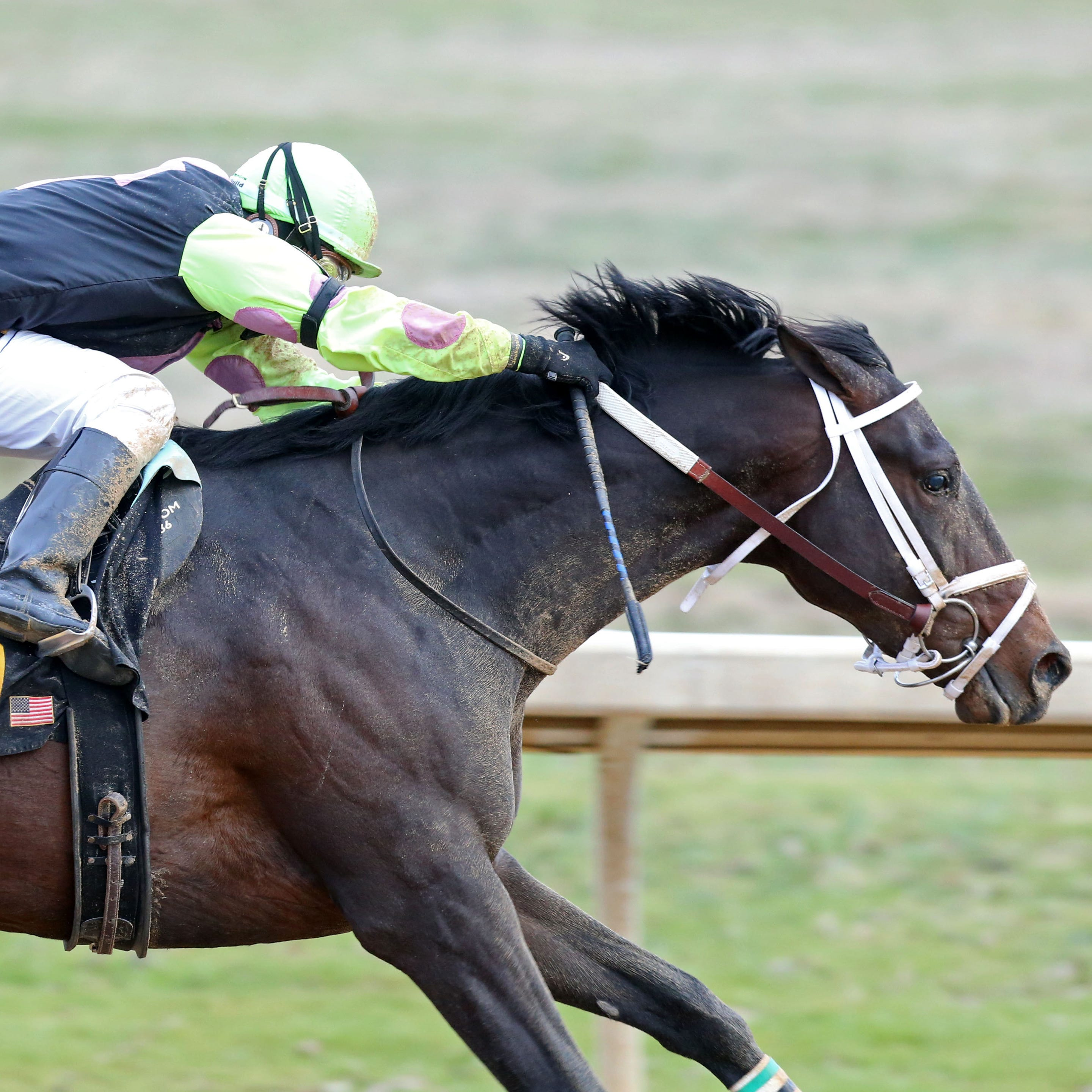 Southwest Stakes win returns locally-owned Super Steed to Kentucky Derby picture