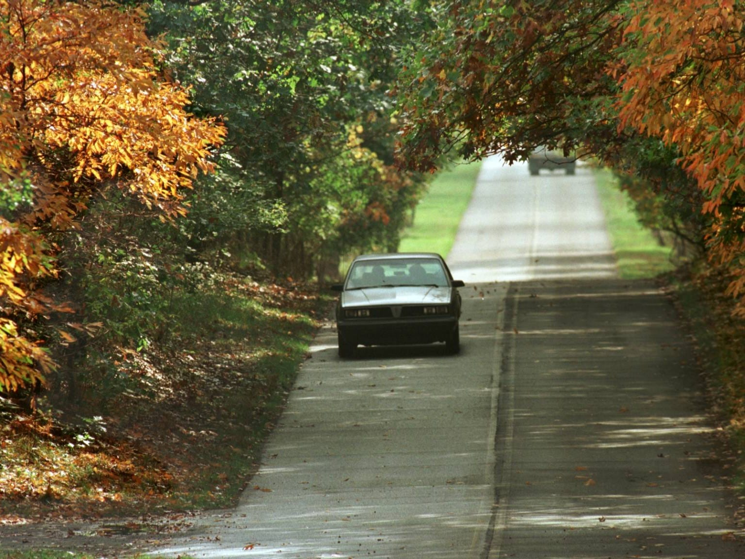 A car travels through a canopy of leaves on East State Park Road in Indiana Dunes State Park.