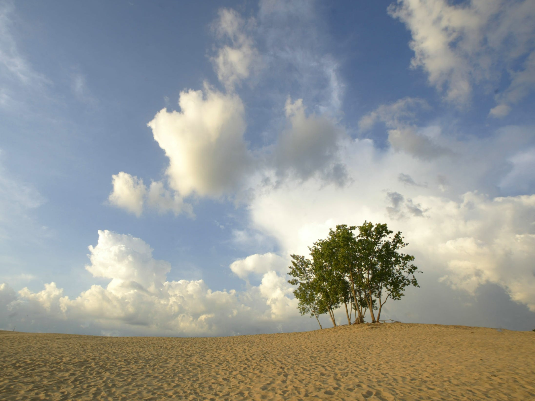 A clearing thunderstorm and a stand of trees create a striking image at sunrise on top of  Mt. Baldy. The 125-foot-tall sand dune is the trademark of the beach near Michigan City.