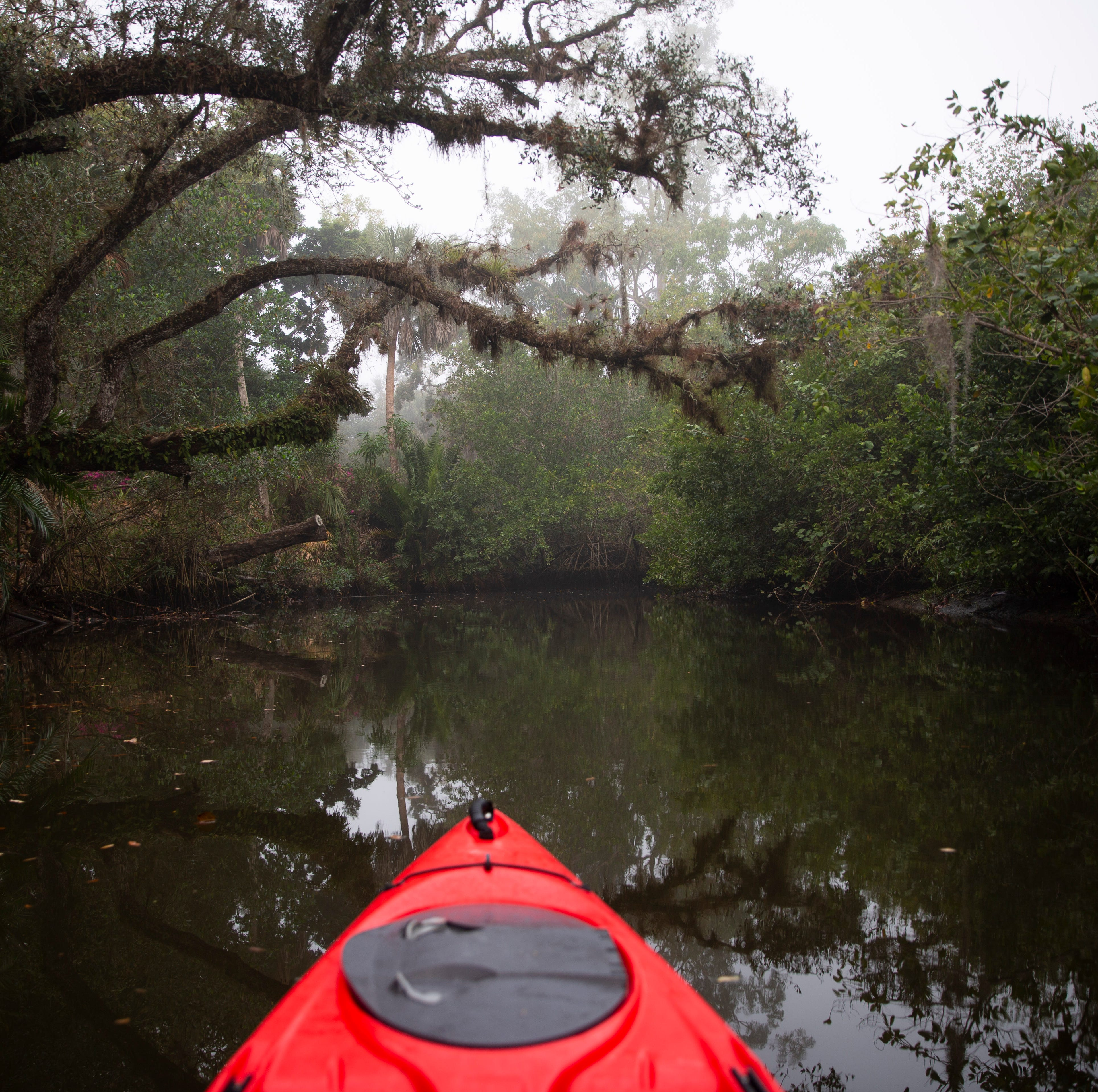 Our World: Kayaking on the Estero River