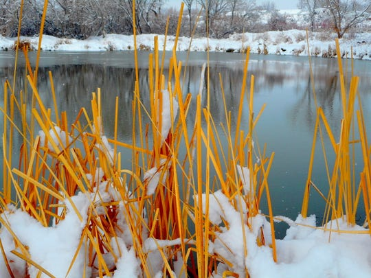 Snow clings to reeds growing along the banks of a pond Tuesday at Riverside Park in Aztec.