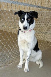 Here is Alyssa; she is about 1 year old, and is a very outgoing friendly girl.