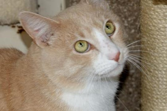 Aslan is a very chill 2-year-old male.