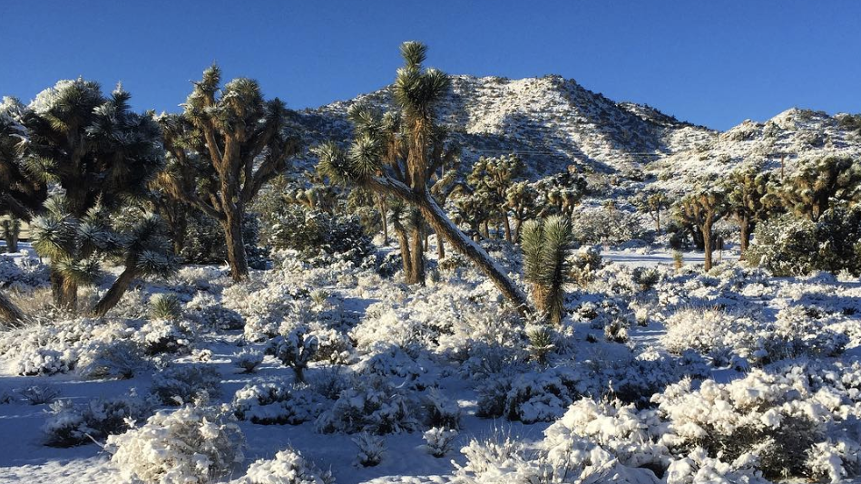 The latest in weird desert weather: Snow in Joshua Tree and other parts of the high desert
