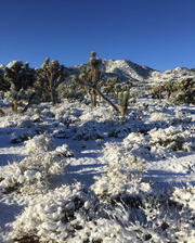 Joshua Tree National Park covered in snow after a storm rolled through Sunday night. The park service shared this image on their Instagram on Feb. 18, 2019.
