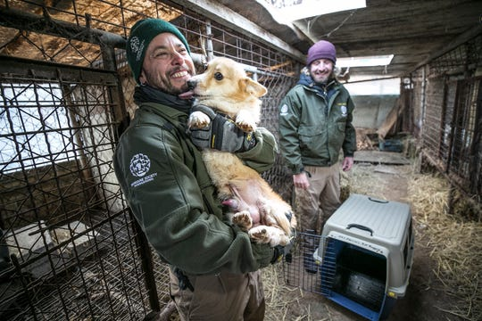 The HSI Animal Rescue Team rescues a dog at a dog meat farm in Hongseong-gun, South Korea, on Wednesday, February 13, 2019.  The operation is part of HSIs efforts to fight the dog meat trade throughout Asia. In South Korea, the campaign includes working to raise awareness among Koreans about the plight of meat dogs being no different from the animals more and more of them are keeping as pets.