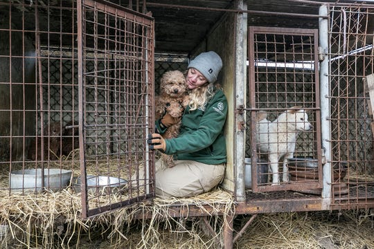 Kelly Donithan, Senior Specialist of Disaster Operations/Animal Protection and Crisis Response of HSI, holds a dog as she rescues it at a dog meat farm in Hongseong-gun, South Korea, on Wednesday, February 13, 2019. The operation is part of HSIs efforts to fight the dog meat trade throughout Asia. In South Korea, the campaign includes working to raise awareness among Koreans about the plight of meat dogs being no different from the animals more and more of them are keeping as pets.