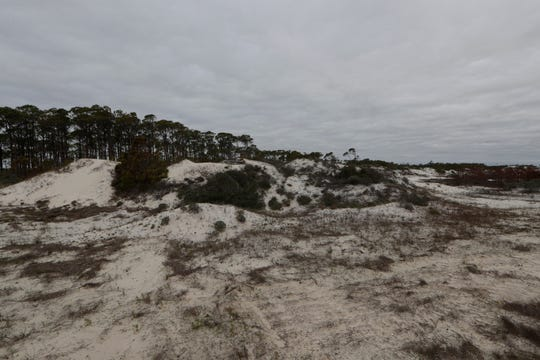 The sand dunes across the road from the beachfront in St. George Island State Park are untouched, Tuesday Feb. 19, 2019. The dunes closer to the shoreline were washed away by Hurricane Michael in Oct. 2018.