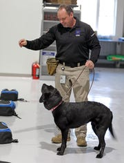 Mark Scardilli works with Clare to find C4, a variety of the plastic explosive at MSA's brand new explosive detection canine training center in Orangetown Feb. 19, 2019.