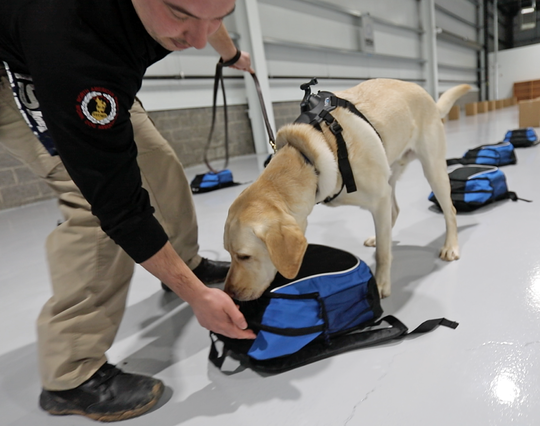 Wesley Paladino, works with Lincoln to find C4, a variety of the plastic explosive at MSA's brand new explosive detection canine training center in Orangetown  Feb. 19, 2019.