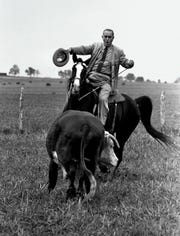 President Lyndon Johnson proves he's a pretty good cowhand as he puts his horse, Lady B, through the paces with a Hereford yearling on his LBJ Ranch near Stonewall, Texas.