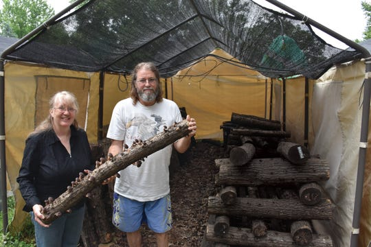Ingrid and Paul West, of Misty Dawn Farm in Dane County, Wisconsin, show shiitakes growing on logs harvested from their forested acres in Vernon County.