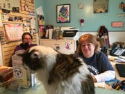 Nolan, a 5-year-old cat, who is up for adoption at New Beginnings Animal Rescue, mans the front desk with rescue co-founders Barbara Keegan (right) and Karen Scott (left).