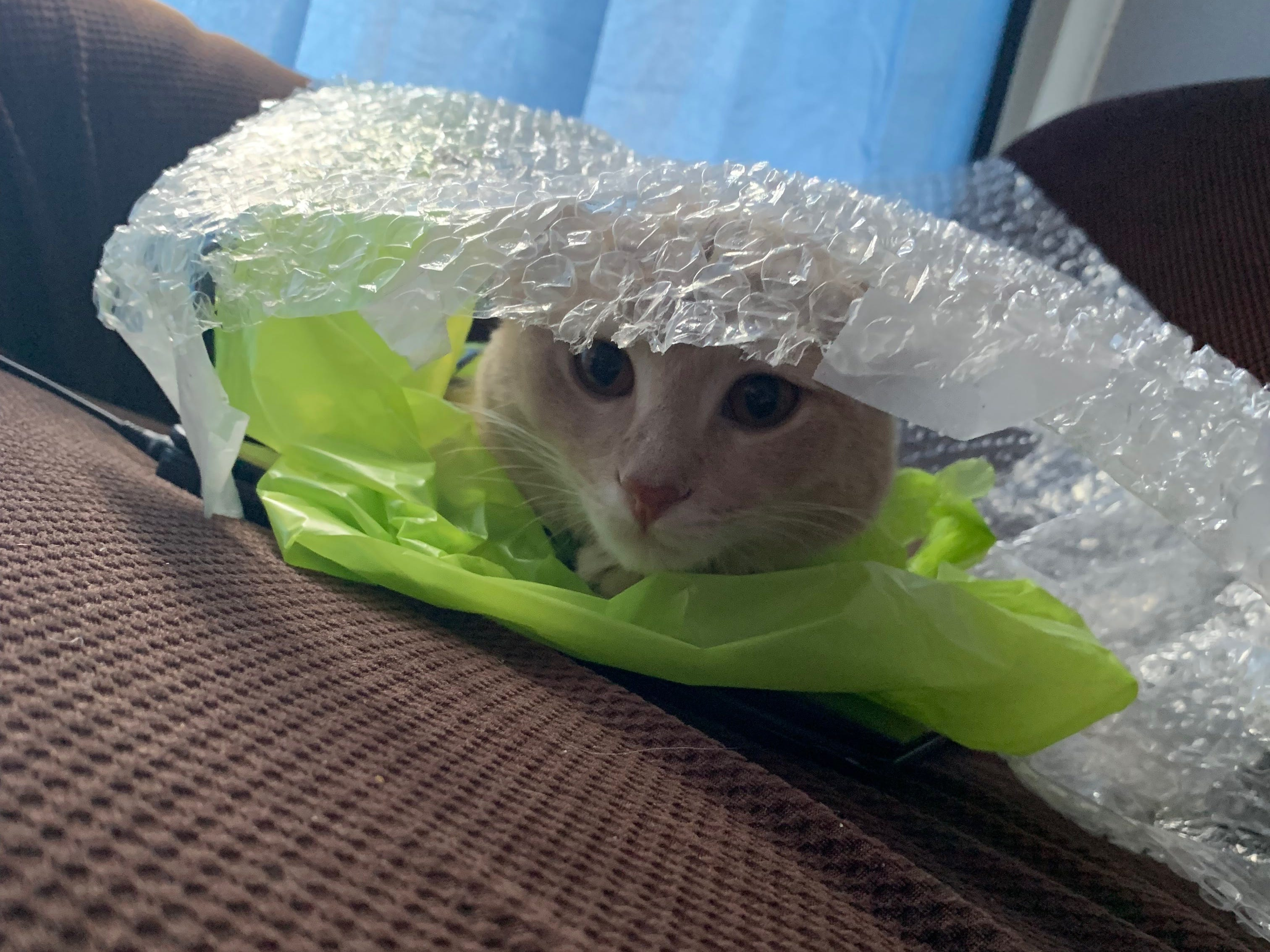 When Peter the cat's friends left a bag and bubble wrap lying on the couch, the young cat decided to make a fort of sorts. Peter belongs to Register breaking news reporter Tyler Davis.