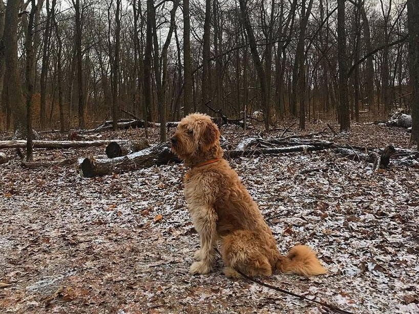 This is Fletcher the 2-year-old goldendoodle that belongs to Register digital planning editor Adam Wilson. He's on a hike at Thomas Mitchell Park.