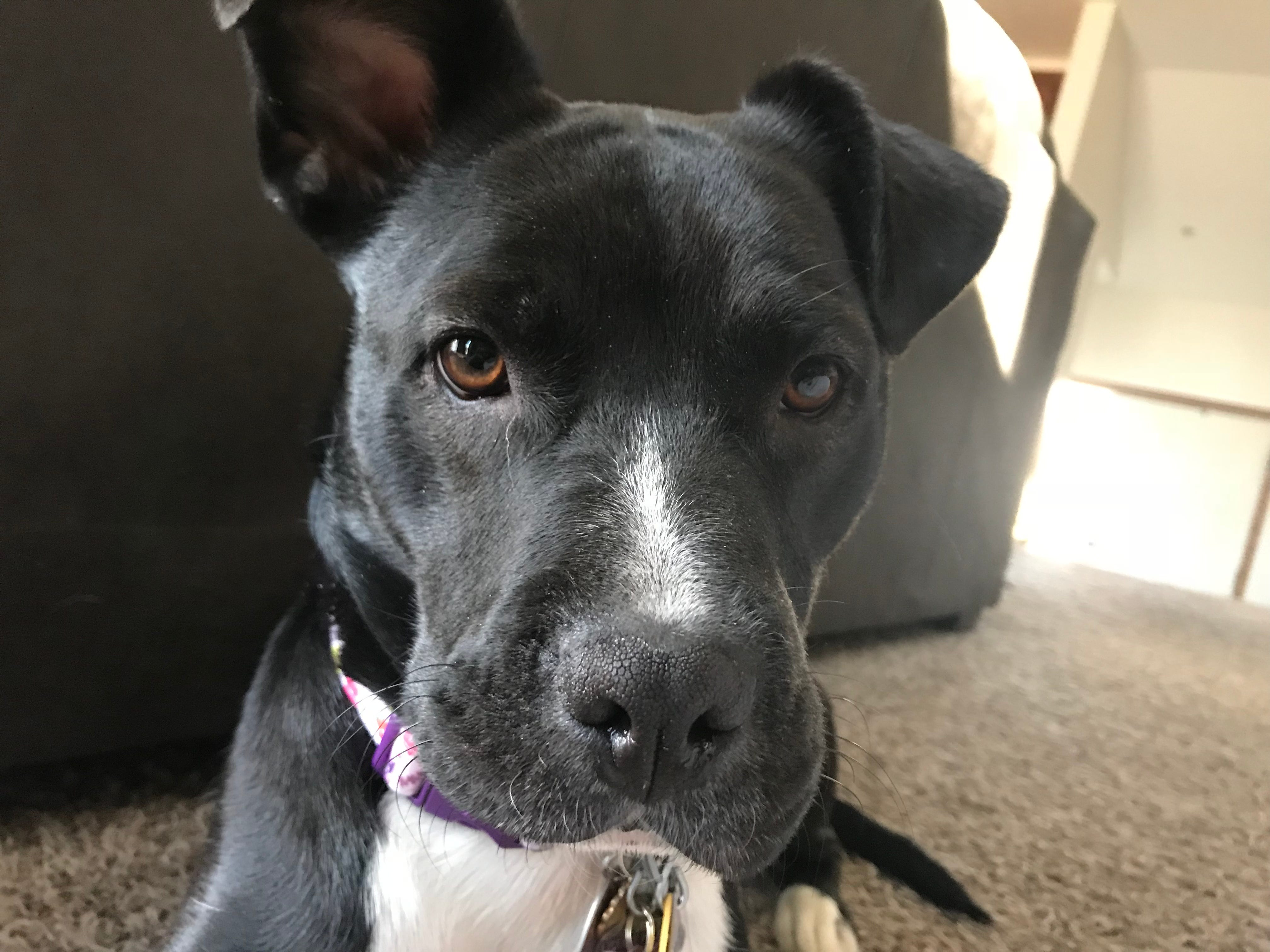 This is Lucy, a 2-year-old lab mix adopted from the Animal Rescue League of Iowa that belongs to entertainment reporter Matthew Leimkuehler.