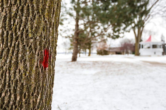 Trees may be marked with red dots to indicate removal.