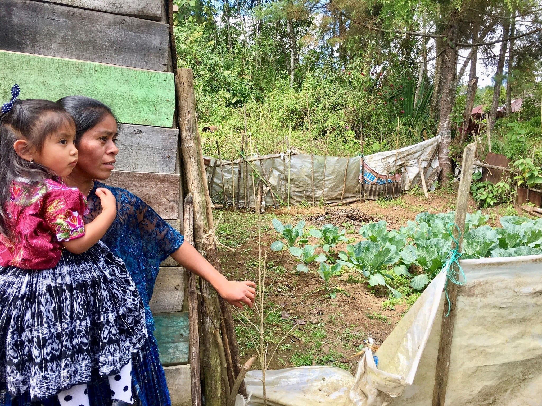 Maria, a single mother in the Chioya community in Guatemala, invites us to see her garden of cabbage she has learned to plant and harvest through a partnership with Food for the Hungry.