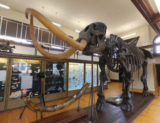 A mastodon skeleton at the Rutgers Geological Museum  on February 6, 2019.