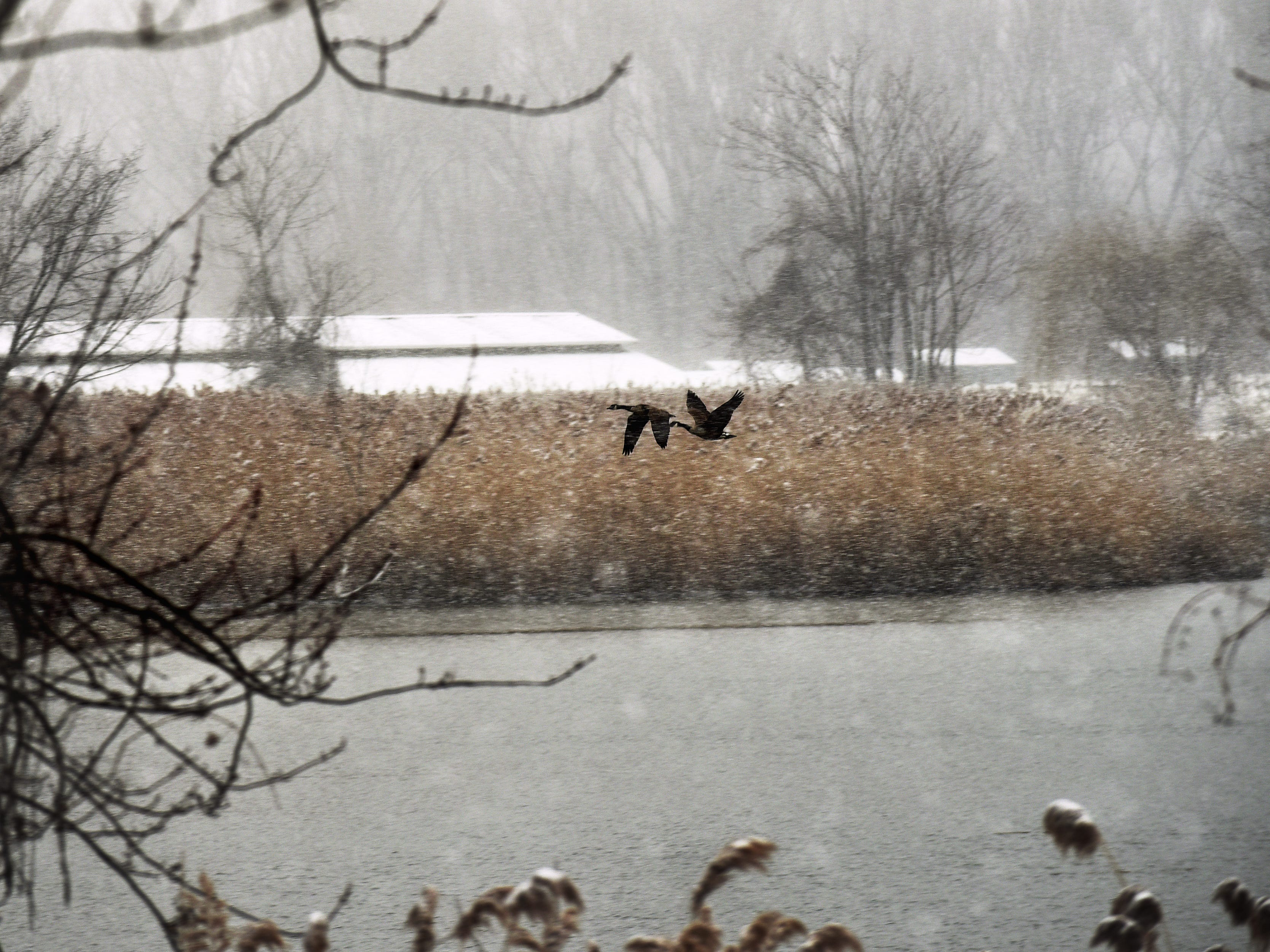 Geese fly above Overpeck Creek as snow falls in Overpeck Park in Ridgefield Park on Wednesday February 20, 2019.