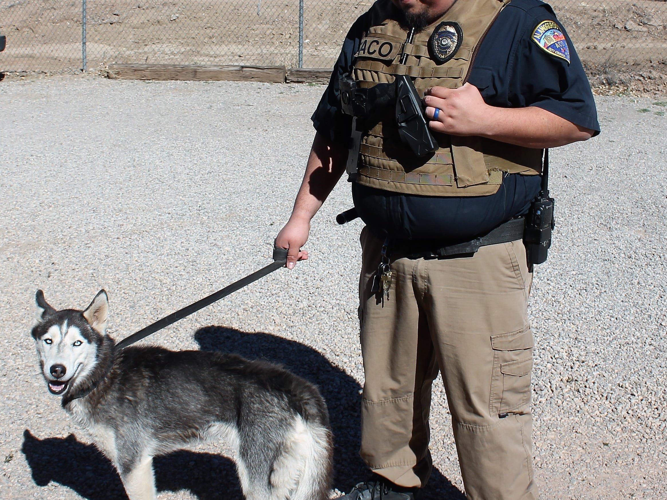 Alamogordo Animal Control Officer Carlos Juarez takes a husky mix for a walk that is up for adoption at Alamogordo Animal Control.