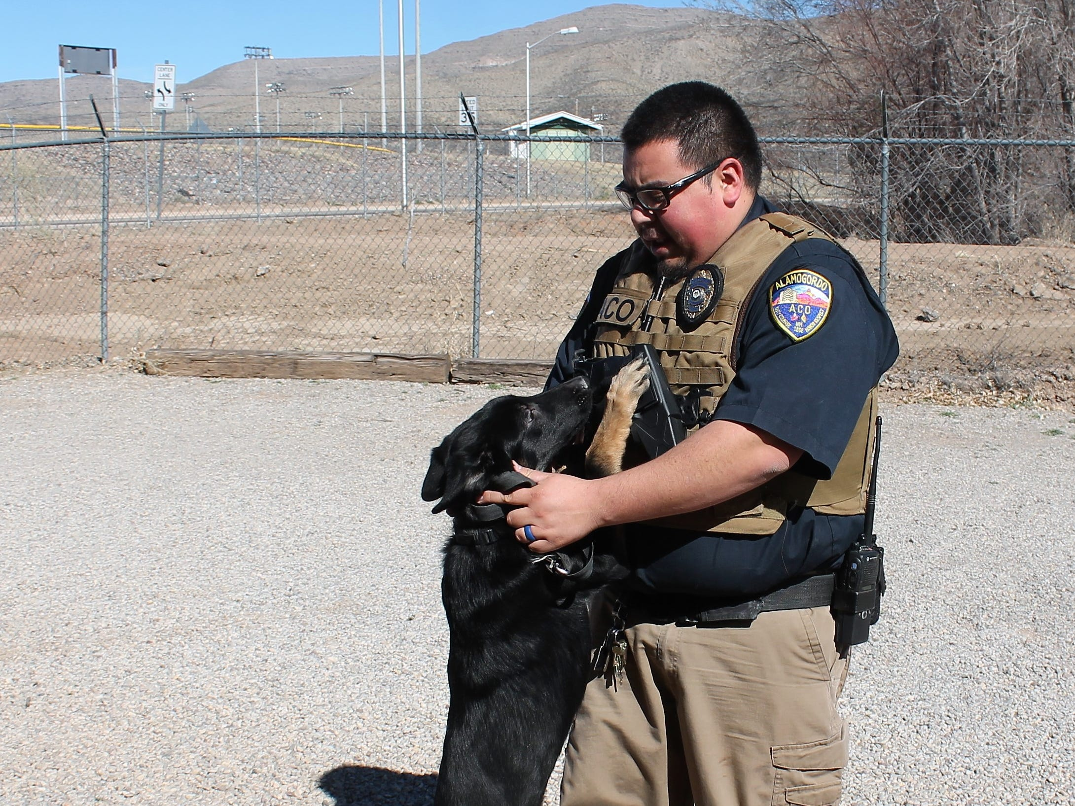 Alamogordo Animal Control Officer Carlos Juarez takes a shepherd mix for a walk that is up for adoption at Alamogordo Animal Control.